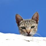 Ciekawy kot Fotografia Royalty Free
