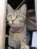 ciekawy kota fotografia stock