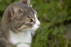 ciekawy kota Zdjęcie Royalty Free