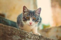 ciekawy kota obrazy royalty free