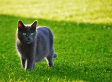 Ciekawy kota dopatrywanie, czekanie i Obraz Stock