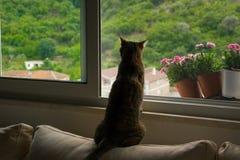 Ciekawy kota obsiadanie na kanapie ogląda co zdarza się outside Fotografia Royalty Free