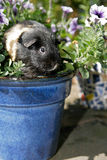Ciekawy królik doświadczalny Zdjęcie Stock