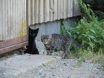 Ciekawy śliczny śmieszny kot Fotografia Stock