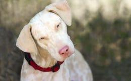 ciekawy pies Zdjęcie Stock