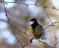 Ciekawy ptak Obrazy Stock