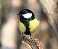 Ciekawy ptak Zdjęcia Stock
