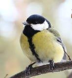 Ciekawy ptak Fotografia Stock