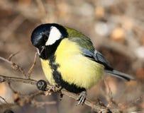 Ciekawy ptak Obrazy Royalty Free