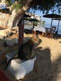 Ciekawy spojrzenie przy kotem na seashore obraz royalty free