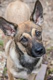 Ciekawy szczeniaka portret Fotografia Stock