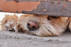 Ciekawy widok Pies k?ama pod drzwi i spojrzenia zabawny pies ?mieszni zwierz?ta domowe zdjęcia royalty free