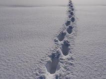Ścieżki zimy krajobraz Obrazy Royalty Free