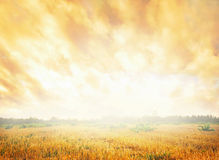 Ciel épanouissant Photographie stock