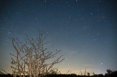 Ciel étoilé au-dessus d'arbre isolé photographie stock