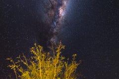 Ciel étoilé et nuit namibienne d'astro de manière laiteuse, arbre dans le premier plan Aventures dans le sauvage Photos libres de droits