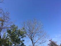 Ciel, arbres Photographie stock