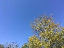 Ciel, arbres Photo stock
