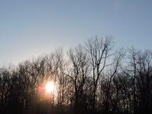 Ciel, arbres, et Sun Images libres de droits