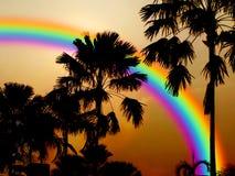 ciel arrière de coucher du soleil d'arbre de noix de coco de silhouette de rianbow Photo libre de droits
