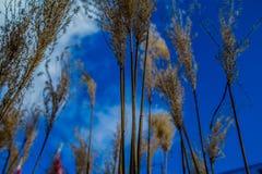 Ciel au-dessus de Dahlem Dorf de Berlin Image libre de droits