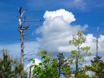 Ciel au-dessus de gorge de Linville Image libre de droits