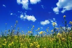 Ciel avec des fleurs Photo libre de droits