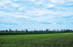 Ciel avec des nuages au-dessus de champ vert Image stock