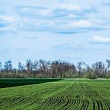 Ciel avec des nuages au-dessus des champs verts Images libres de droits