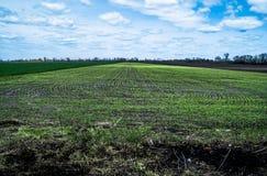 Ciel avec des nuages au-dessus des champs verts et noirs Photographie stock