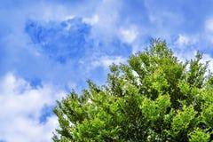 Ciel avec des nuages et des arbres verts Photos stock
