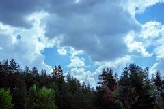 Ciel avec des nuages et les dessus de la forêt conifére Photos libres de droits