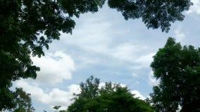 Ciel avec l'arbre Image stock