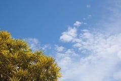 Ciel avec l'arbre jaune Photo libre de droits