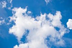 Ciel avec la branche Photos libres de droits