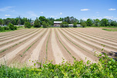 Ciel bleu énorme Sunny Day de champ de ferme beau Images stock