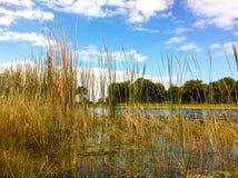 Ciel bleu, étang et végétation photos libres de droits