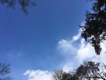 Ciel bleu, arbres Photo stock
