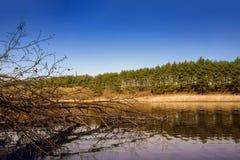 Ciel bleu, arbres reflétés dans le lac Paysage tranquille images libres de droits