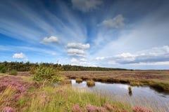 Ciel bleu au-dessus de marais avec la bruyère Image libre de droits