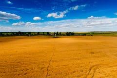 Ciel bleu au-dessus de paysage d'or de champ de blé photo libre de droits
