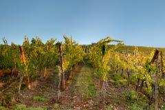 Ciel bleu au-dessus de vigne photos stock