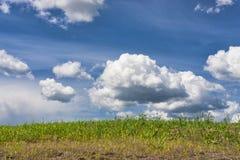 Ciel bleu au-dessus des terres cultivables. Photos stock