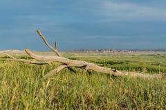 Ciel bleu au-dessus du morceau de bois mort dans le domaine photos libres de droits
