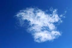 Ciel bleu au parc national de Saguaro Images stock