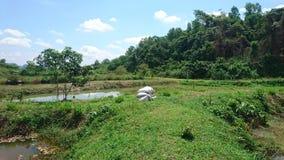 Ciel bleu avec des étangs de verdure image libre de droits