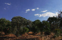 Ciel bleu avec des arbres images stock