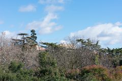 Ciel bleu avec des arbres de parc de ville image libre de droits
