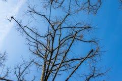 Ciel bleu avec des constrictions et des branches au bord Photographie stock libre de droits
