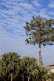 Ciel bleu avec des nuages de coton de peacefull Photographie stock libre de droits
